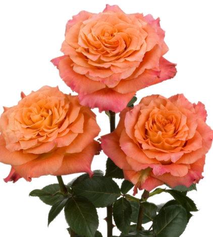 roses oranges free spirit Fleuriste Neuville sur Saône Fleurs mariage Lyon Livraison Cours art floral deuil Livraison express Fleuriste interflora