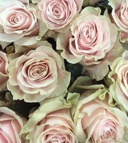 Roses Roses Pink Mondial Fleuriste Neuville sur Saône Fleurs mariage Lyon Livraison Cours art floral deuil Livraison express Fleuriste interflora