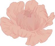 fleuriste livraison neuville sur saone lyon au paradis des fleurs mariage Fleuriste, Fleuriste Neuville sur Saône, Fleurs mariage Lyon, Livraison fleurs Neuville sur Saône, Cours art floral, Fleuriste Neuville sur Saône Lyon, Fleuriste Lyon, Fleuriste Lyon Neuville sur Saône, Fleuriste mariage, Fleurs deuil, Livraison express, Fleuriste interflora logo flowers pivoine
