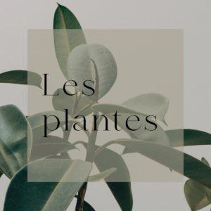 fleuriste neuville sur saone boutique en ligne les plantes